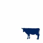 Cattle Feed Supplements - Cattle Feed Additives Manufacturer - Explore our innovative Products for cattle and beef industry